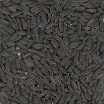 Avicentra slunečnice černá 25kg