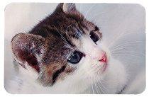 TRIXIE Prostírání - gumová podložka pod misky - fotka kočky 43x28cm